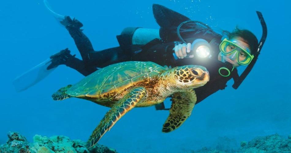 Aruba Scuba Diver Turtle 950x500 - Địa Danh Lí Thú Tại thái Lan Dành Cho Bạn