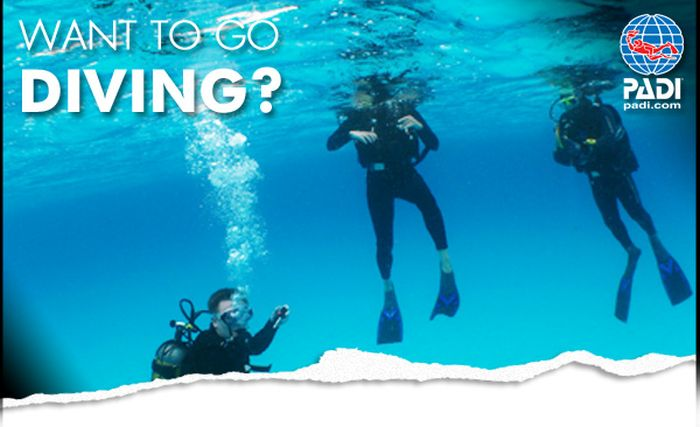 Beginner to professional padi certification best diving stuff beginner to professional padi certification fandeluxe Choice Image