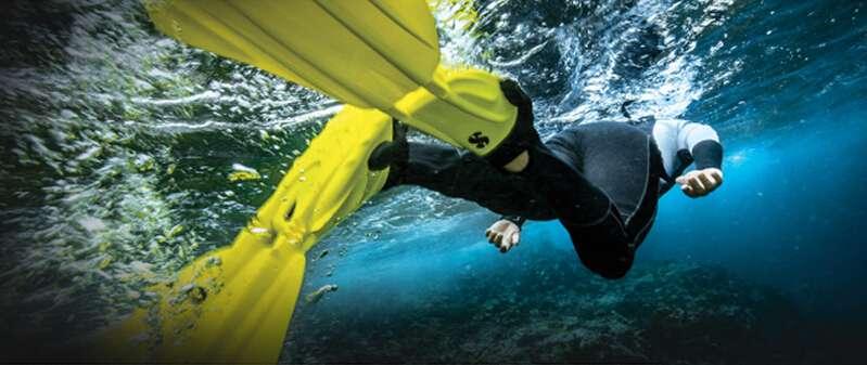 scuba gear fins